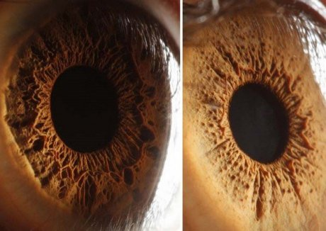 Close up of an Iris