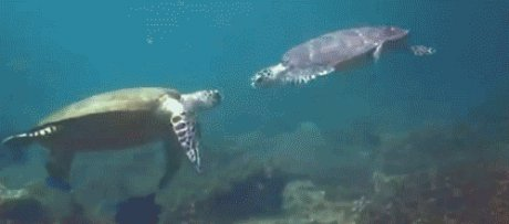 greeting between two turtles