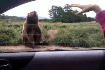 man and bear greet