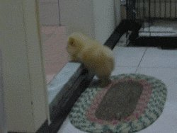 attempt to jump over the threshold