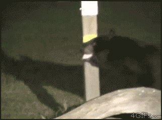 Bear makes trouble