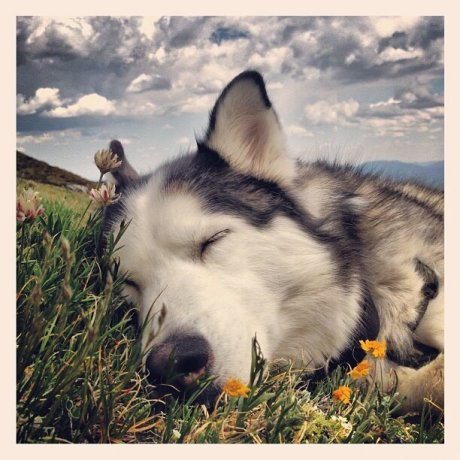 After hiking up a glacier, Bode needed a nap...