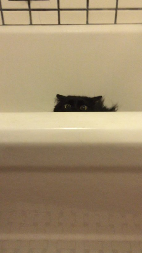 My cat likes to hunt me when I go to the bathroom...