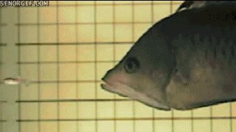 Fish eating another fish
