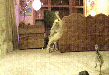 It's a Baby Ostrich Dance Party!