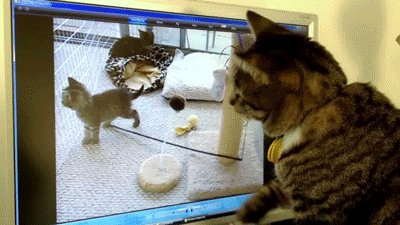 WTF?? - Come back kitty!
